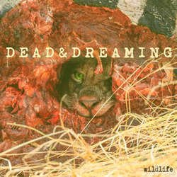 画像1: DEAD & DREAMING - Wildlife [EP]