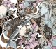DESOLATED - The End [CD]